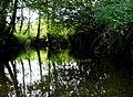 Stream at Sandhills , Cattistock - geograph.org.uk - 1011864.jpg