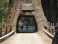 Street Through Tree - Chandelier Tree.jpg