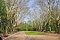 Stryiskyi Park Sycamore Avenue.JPG