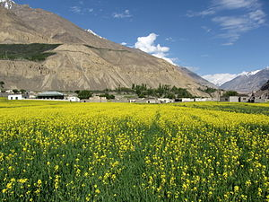 Shimshal - Shimshal in Summer