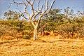 Sumu wildlife park 6.jpg