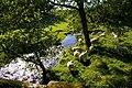 Sunnygill Beck - geograph.org.uk - 242396.jpg