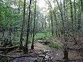Swamp next to the Teufelsbruch swamp in summer 3.jpg