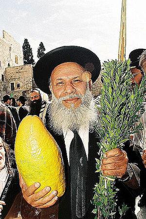 Yemenite citron - Yemenite Jew at the Western Wall with a large Yemenite etrog