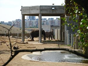 Tallinn Zoo - Tallinn Zoo elephant enclosure.