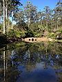 Tamborine Mountain Botanic Gardens 07.JPG