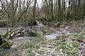Tangled woods, Ynys-hir - geograph.org.uk - 1726609.jpg