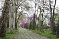 TashkentParks.jpg