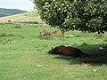 Taurus Dormiens Nunquam Titillandus - geograph.org.uk - 1381772.jpg