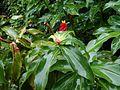 Terra Nostra Gardens (23948963164).jpg