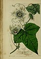The Botanical register consisting of coloured figures of (1815) (14750186736).jpg