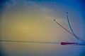 The Red Arrows ON CLIFTON BEACH.jpg
