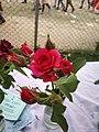 The Rose of Love.jpg