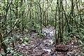 The Trail follows the creek ... (38876211464).jpg