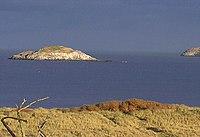 The lamb island.jpg