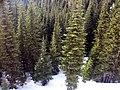 The trees below us (420836335).jpg