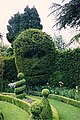 Topiary, Abbey House Gardens, Malmesbury - geograph.org.uk - 1777314.jpg