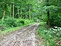Track in Marshfield Wood - geograph.org.uk - 479052.jpg