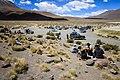Travelers converge for a break near Laguna Canapa in in southwest Bolivia.jpg