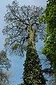 Tree beside Newent Lake - geograph.org.uk - 1274392.jpg