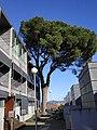 Tree in Guadalupe Braga 2.jpg
