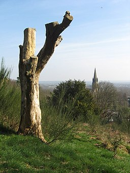 Tree stump and church spire - geograph.org.uk - 1210505