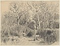 Trees in a Thicket MET DP217850.jpg