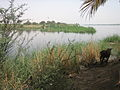 Trek along the Nile (2428827972).jpg