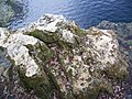 Troy Springs SP springs rocks02.jpg