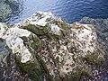 Troy Springs SP springs rocks02.jpg