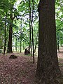 Turbiv park 147.jpg
