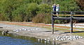 Two english bird-watchers at Bibra Lake.JPG