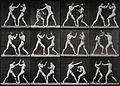 Two men boxing. Photogravure after Eadweard Muybridge, 1887. Wellcome V0048677.jpg