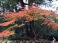 Ujitachicho, Ise, Mie Prefecture 516-0023, Japan - panoramio (3).jpg