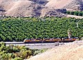 Union Pacific and Orange Groves, Redlands, CA 11-13 (15407540327).jpg