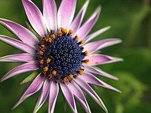 Unknown-flower-awaiting.jpg