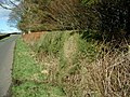 Unusual hedge - geograph.org.uk - 350649.jpg