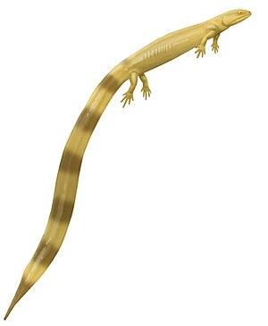 Urocordylidae - Life restoration of Urocordylus wandesfordii, an early urocordylid from Ireland