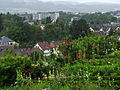 Uster - Wil - Niederuster - Schloss IMG 3488.jpg