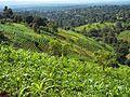 Végétation Bamougong.jpg