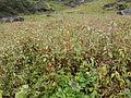 Valley of Flowers 24.JPG