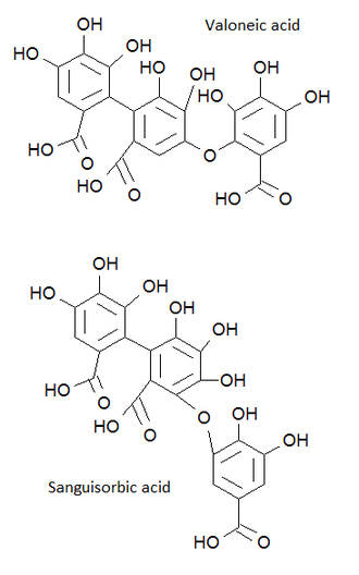 Valoneic acid - Comparison of structures of valoneic and sanguisorbic acids