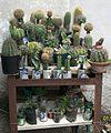 Variedades de cactus.jpg