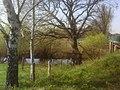 Verden- Gohbach - geo.hlipp.de - 9109.jpg