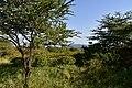 Vicinity of Escarpment Lodge, Lake Manyara National Park (28547627286).jpg