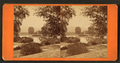 View of the Spring Grove cemetery, from Robert N. Dennis collection of stereoscopic views 2.png