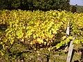 Vignoble du château de Tracy pouilly-fumé.jpg