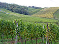 Vineyard near Dambach-la-Ville - panoramio.jpg