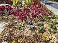 Virágágyás a II. világháborús emlékműnél, 2019 Veresegyház.jpg