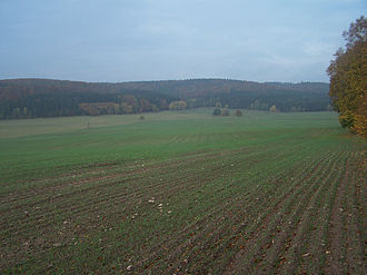 Frauensee - View of the Frauensee Forest